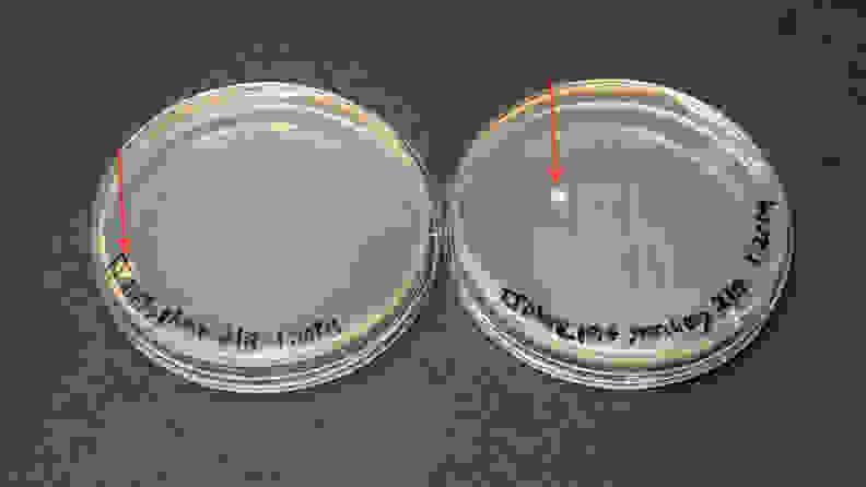 Sterilizer_experiment_2