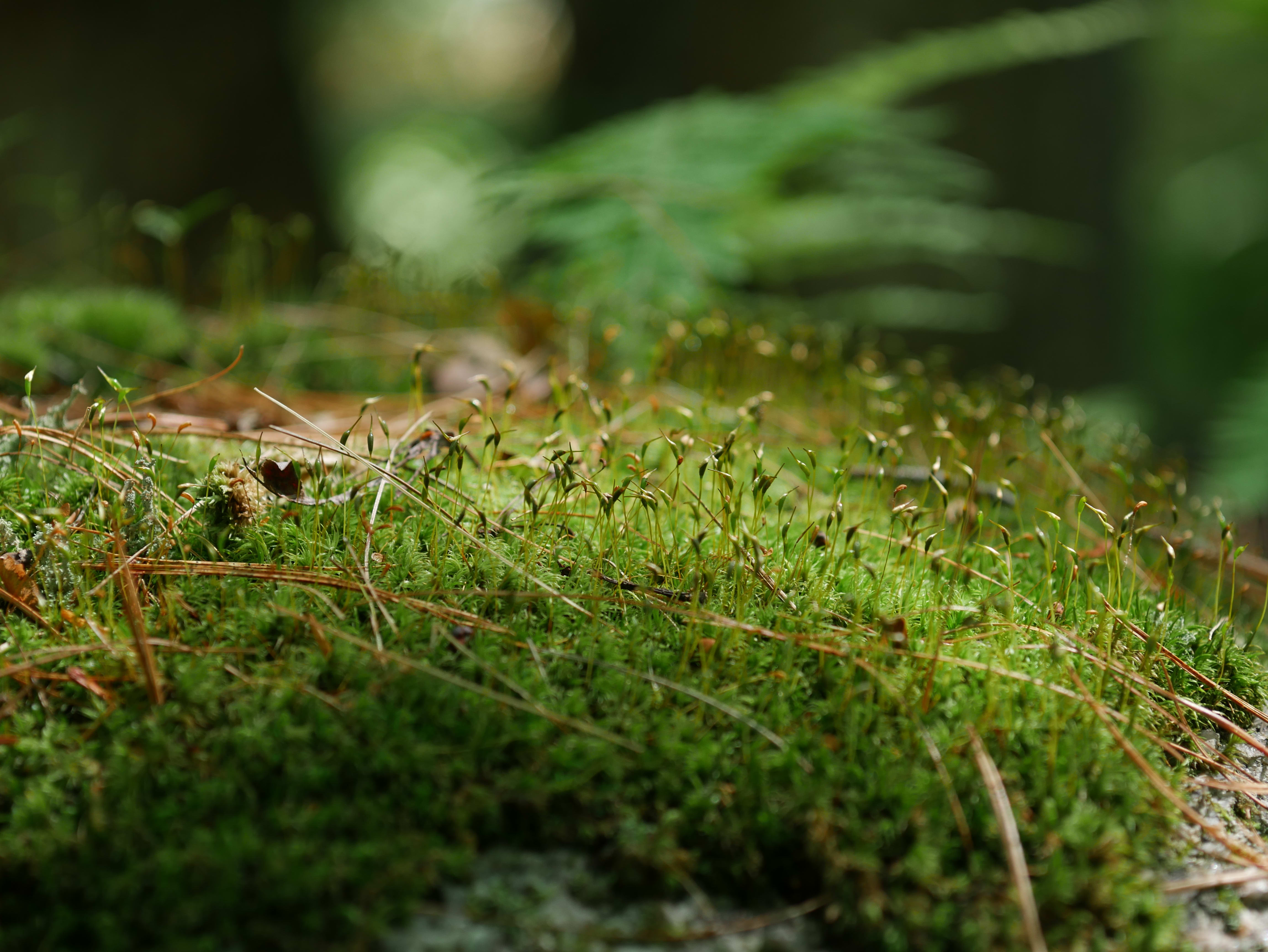 A photo taken by the Panasonic Lumix G7 of moss.