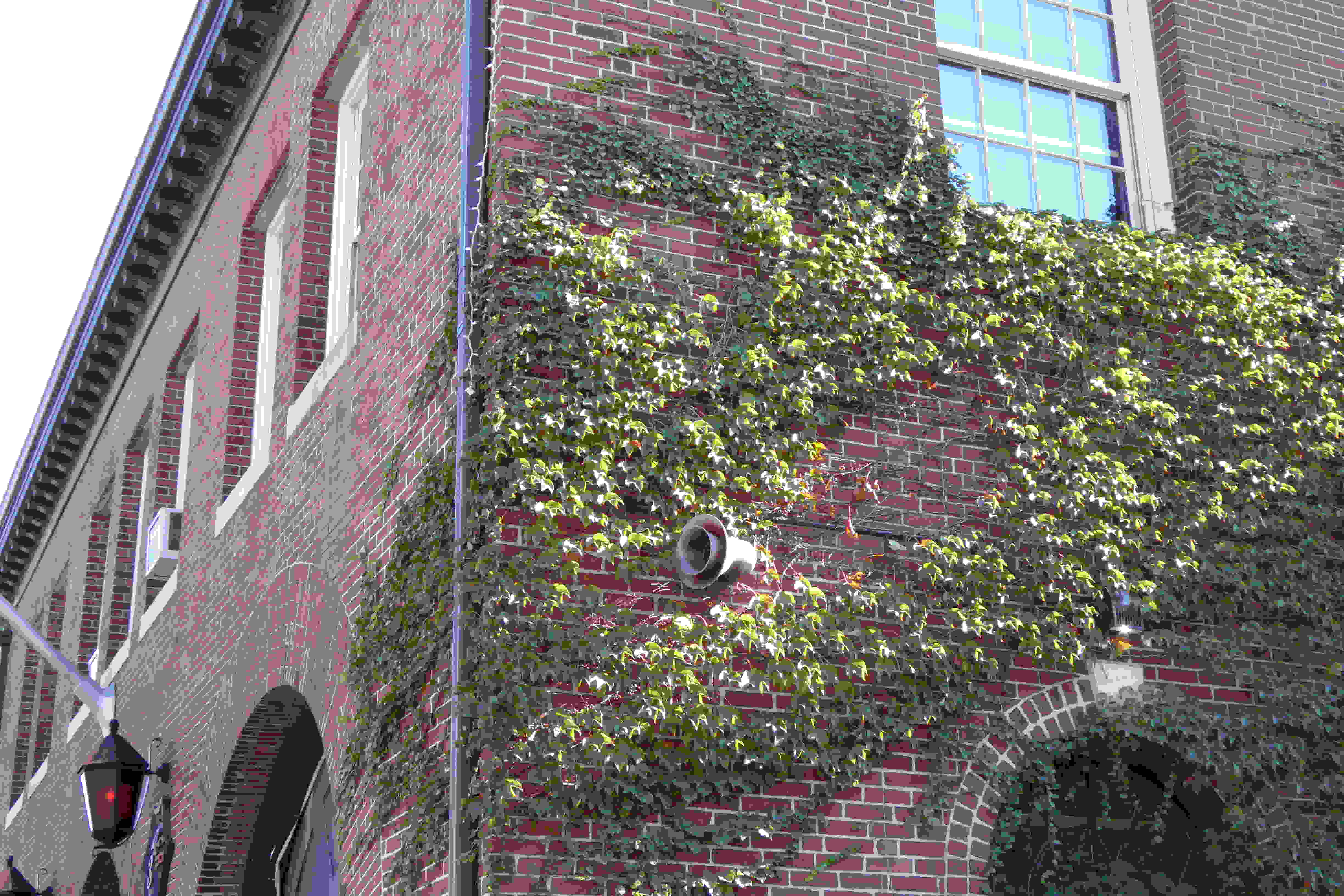 A sample photo of ivy on a firehouse taken by the Panasonic Lumix DSC-ZS40.