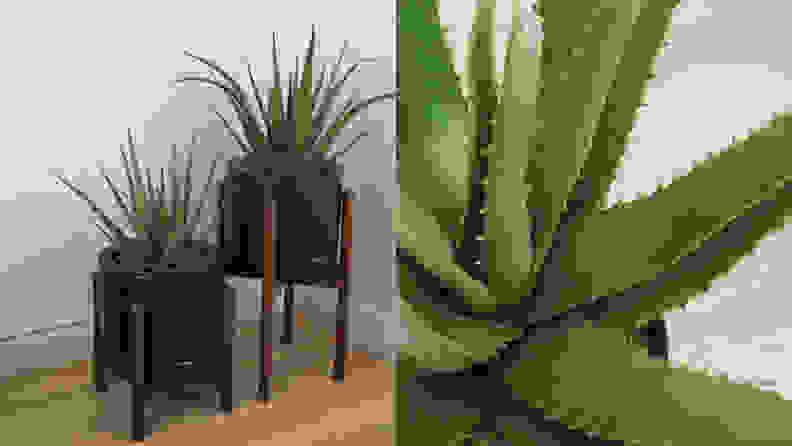 12 Aloe
