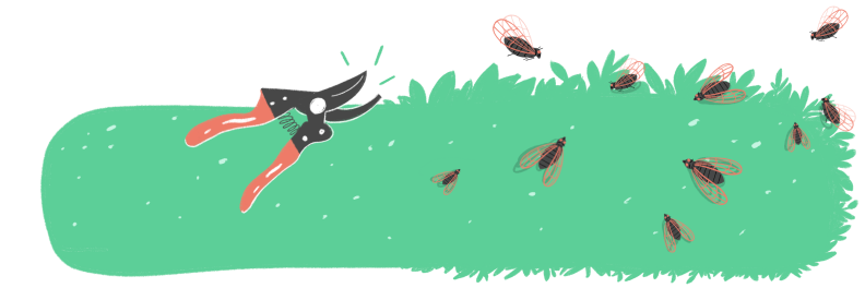 Illustration of pruning shears next to a bush with cicadas flying around