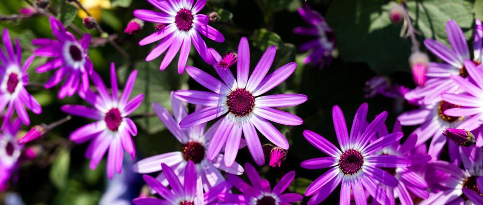 Sample flower