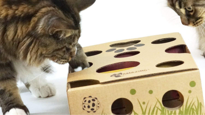 An image of a cat poking its paw through holes in a puzzle box.