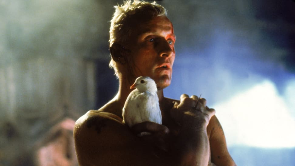 Actor Rutger Hauer holds a white dove in his final scene from 1982's Blade Runner.