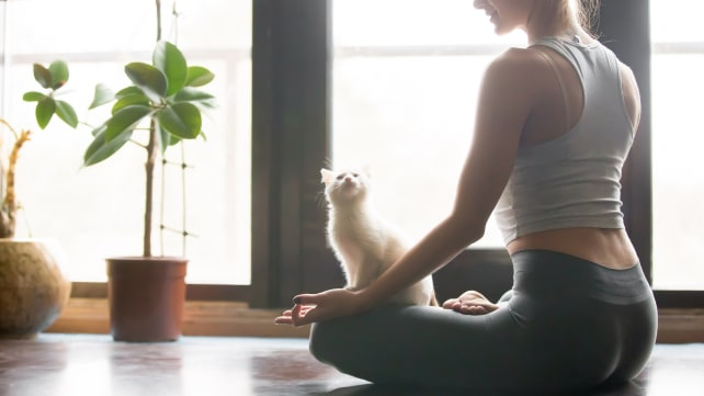 Meditating with a kitten
