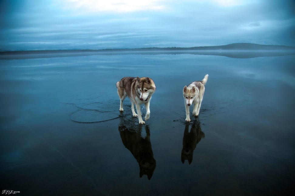 Huskies-Walking-On-Water-12.jpg