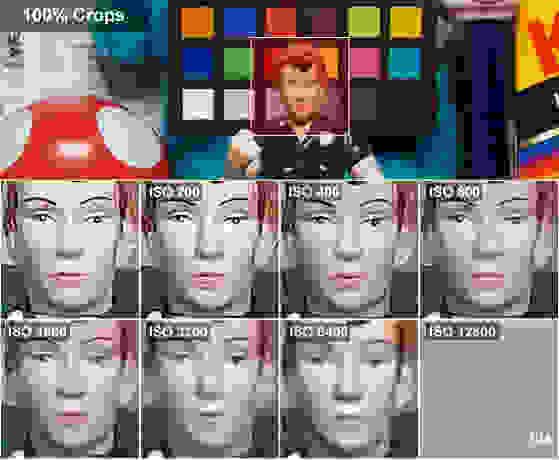 DCI-ROSIE-CROPS.jpg