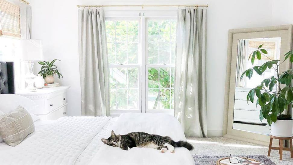 Cat on a bed with curtains in the background