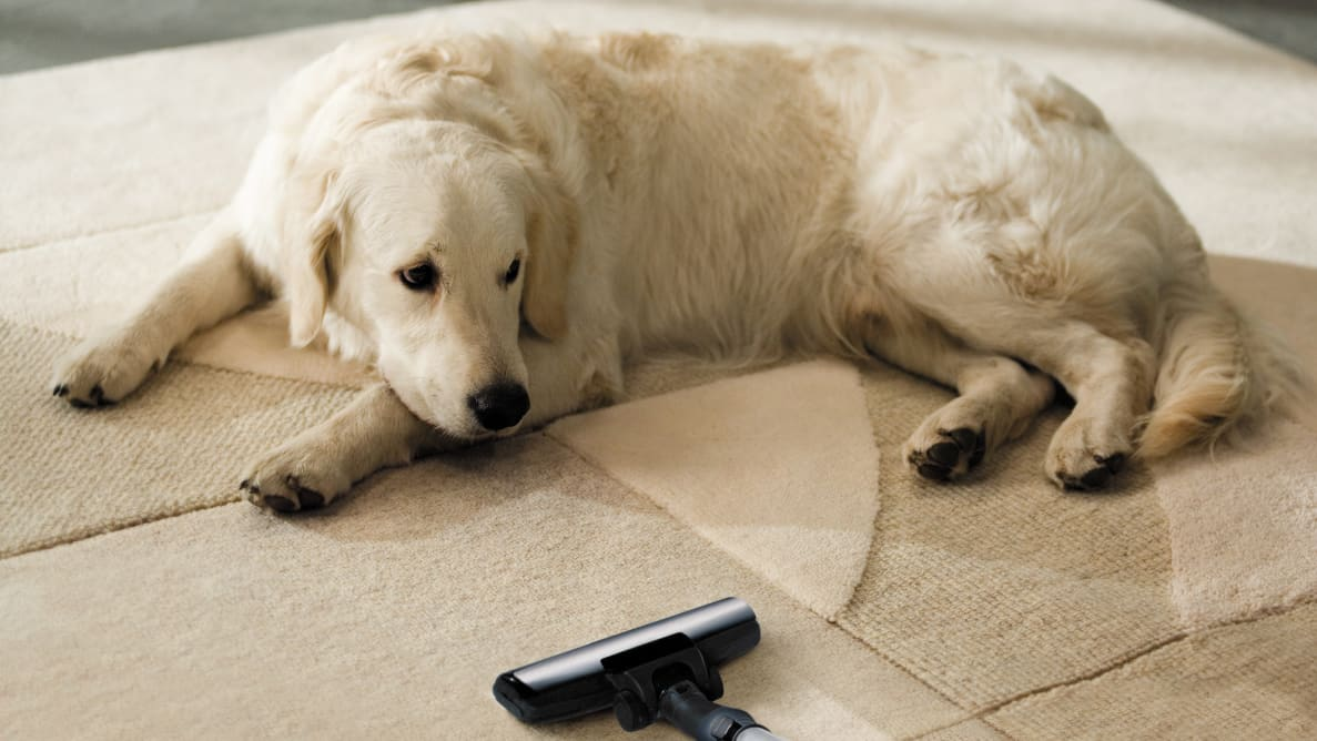 Getting the right vacuum can help keep your house from being taken over by pet hair