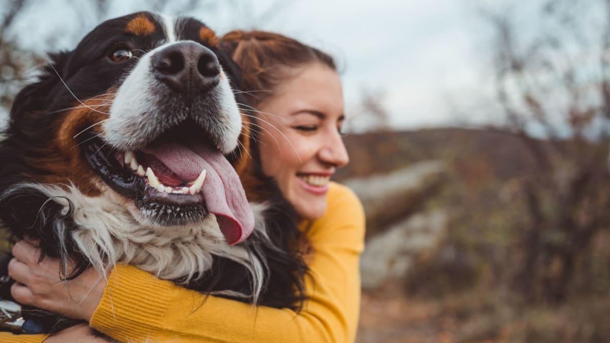 The Best Smart Pet Cameras of 2020
