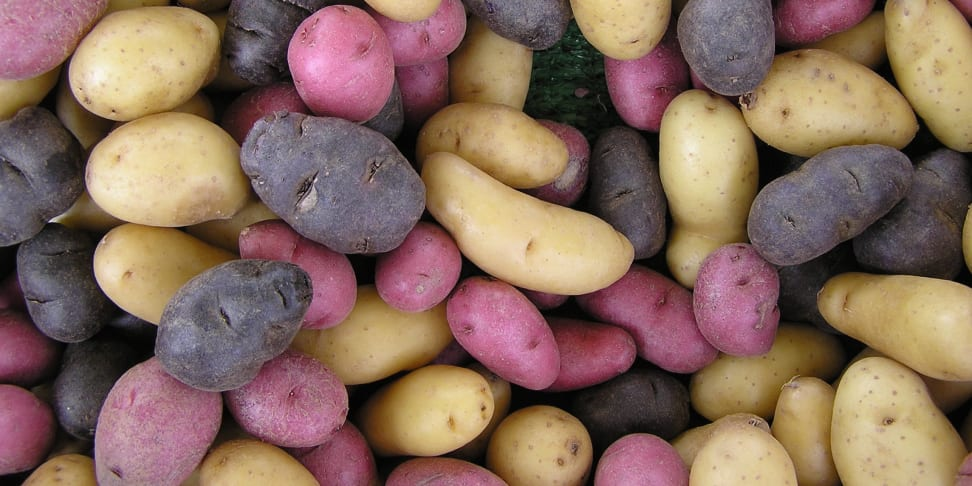 A whole bunch of potatoes