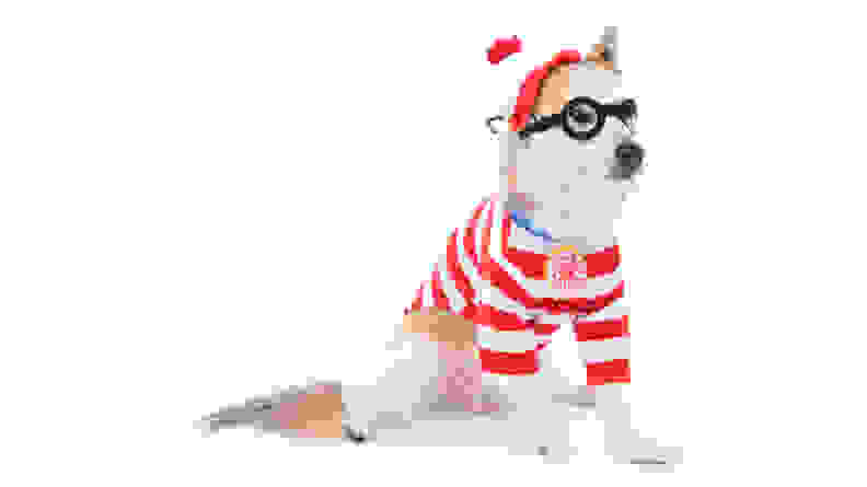 Where's Waldo dog costume