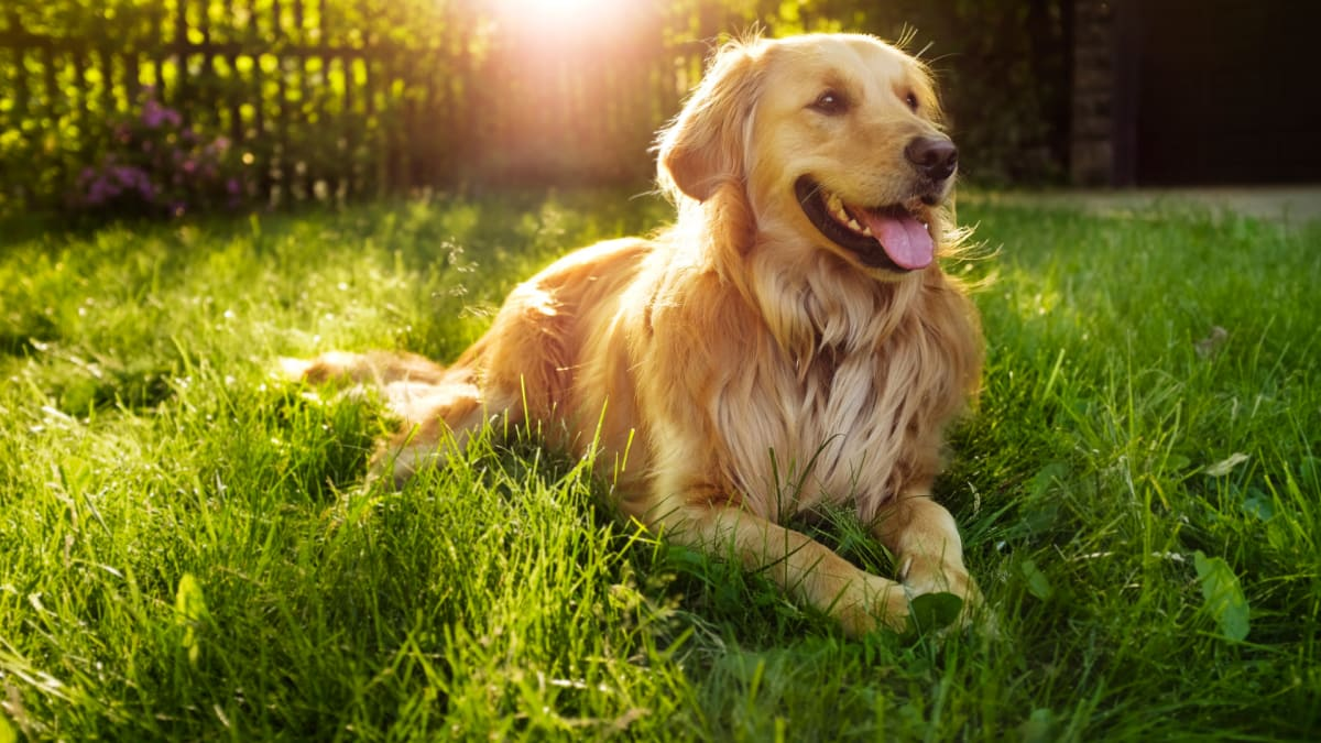 How to keep your pets safe from the heat this summer, according to a vet