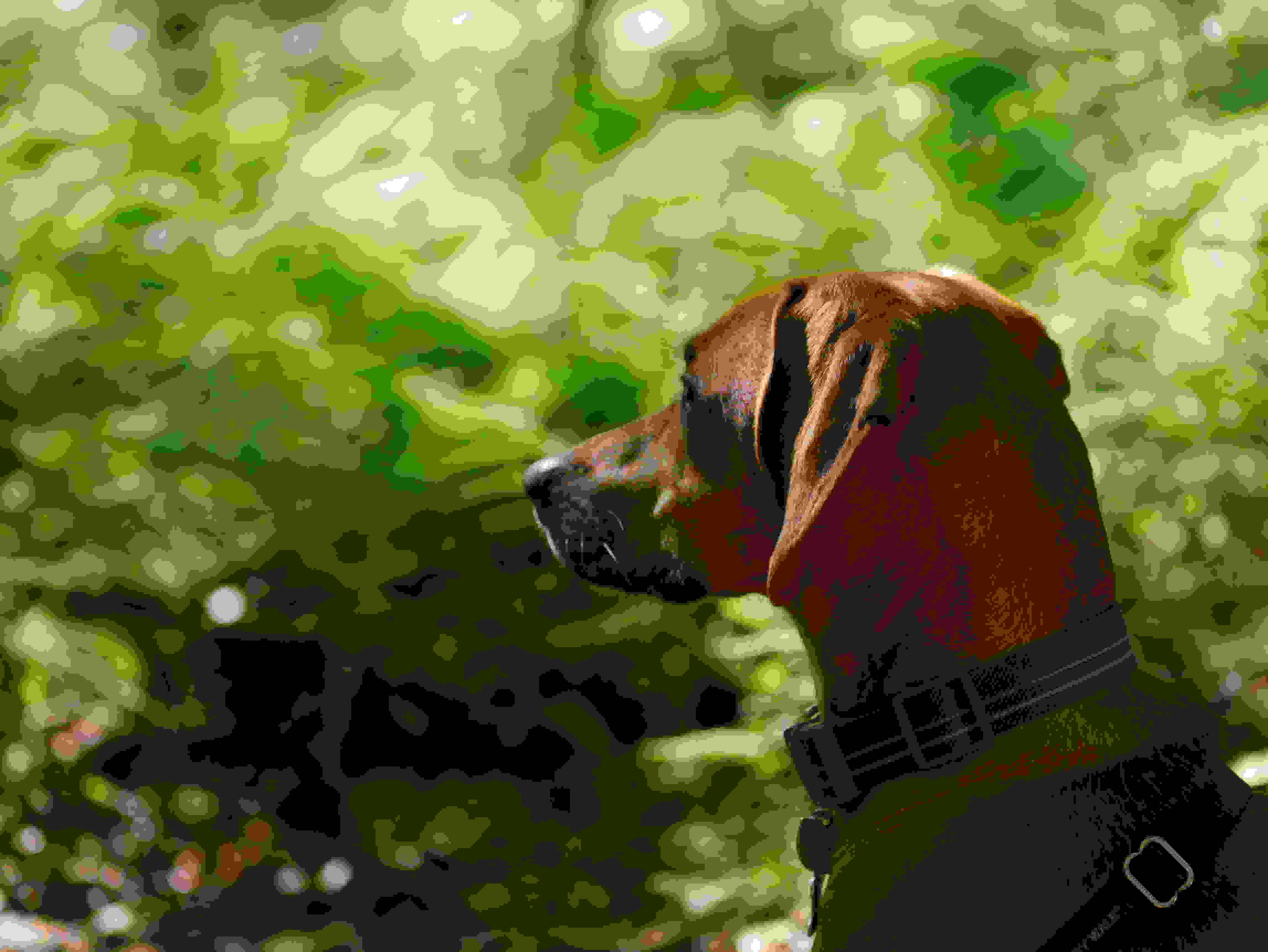A photo taken by the Panasonic Lumix G7 of a dog.