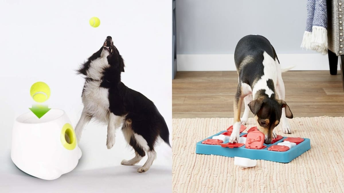 10 things to entertain your dog when you return to the office