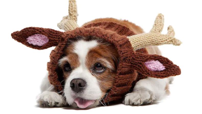 Pup reindeer
