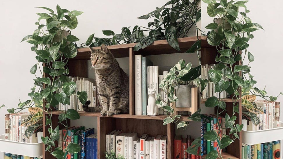 A cat on a bookshelf with plants.