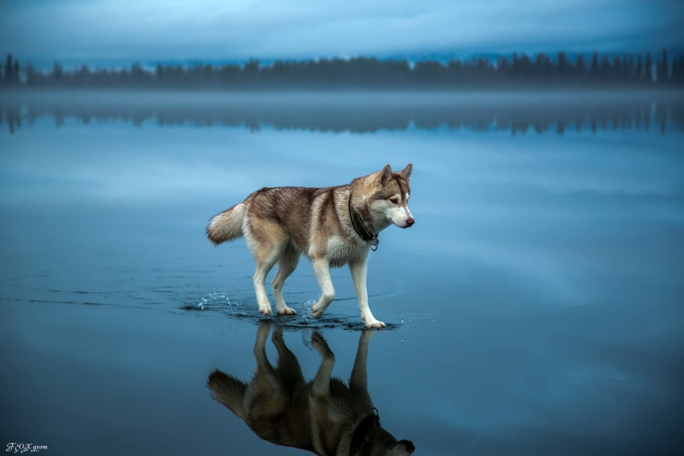 Huskies-Walking-On-Water-1.jpg
