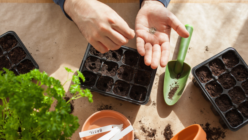 Person planting seeds in a seed tray