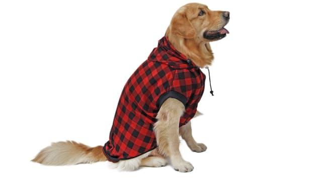 PAWZ Road Dog Sweater
