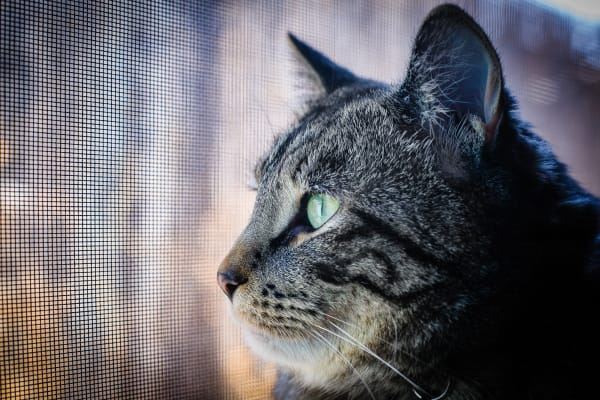 cat thinking critically about life