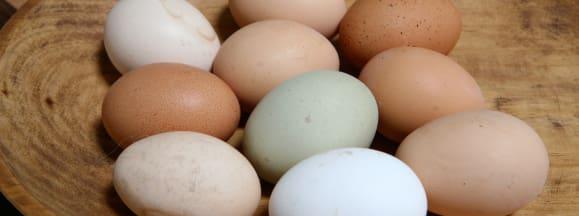Nestle cage free egg hero