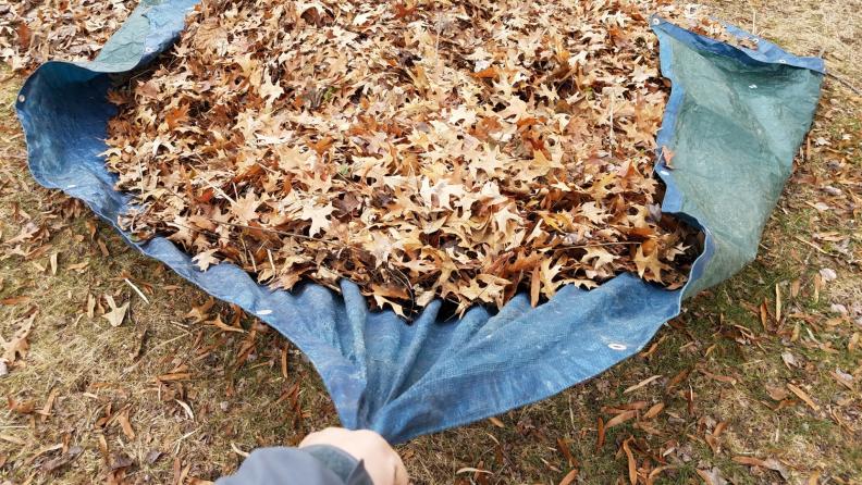tarp leaves