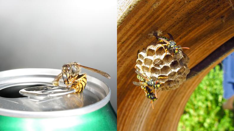 soda and hive