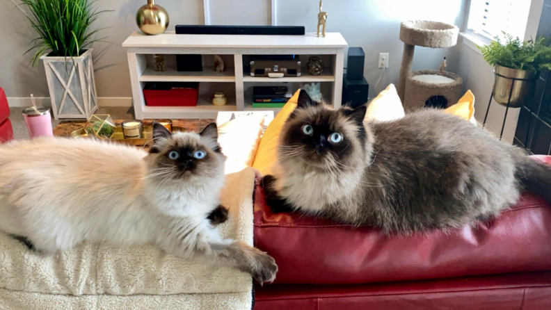 Cats sitting on couch
