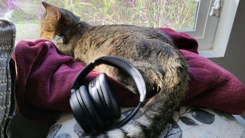 Bose QC45 sitting on a cushion near a brown tabby cat