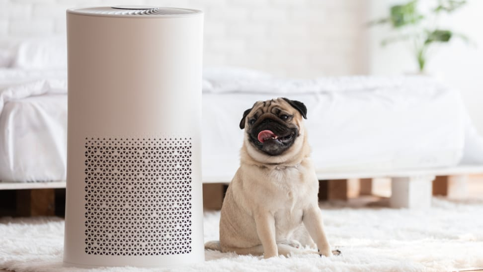 White air purifier sitting on carpet next to a pug in a bedroom