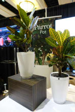 parrot pots.jpg