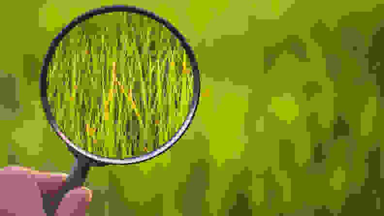 examining grass