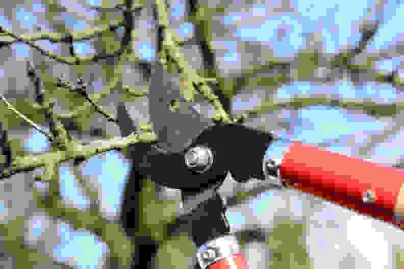 Cut-dead-branches