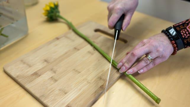 Clip-the-flower-stems