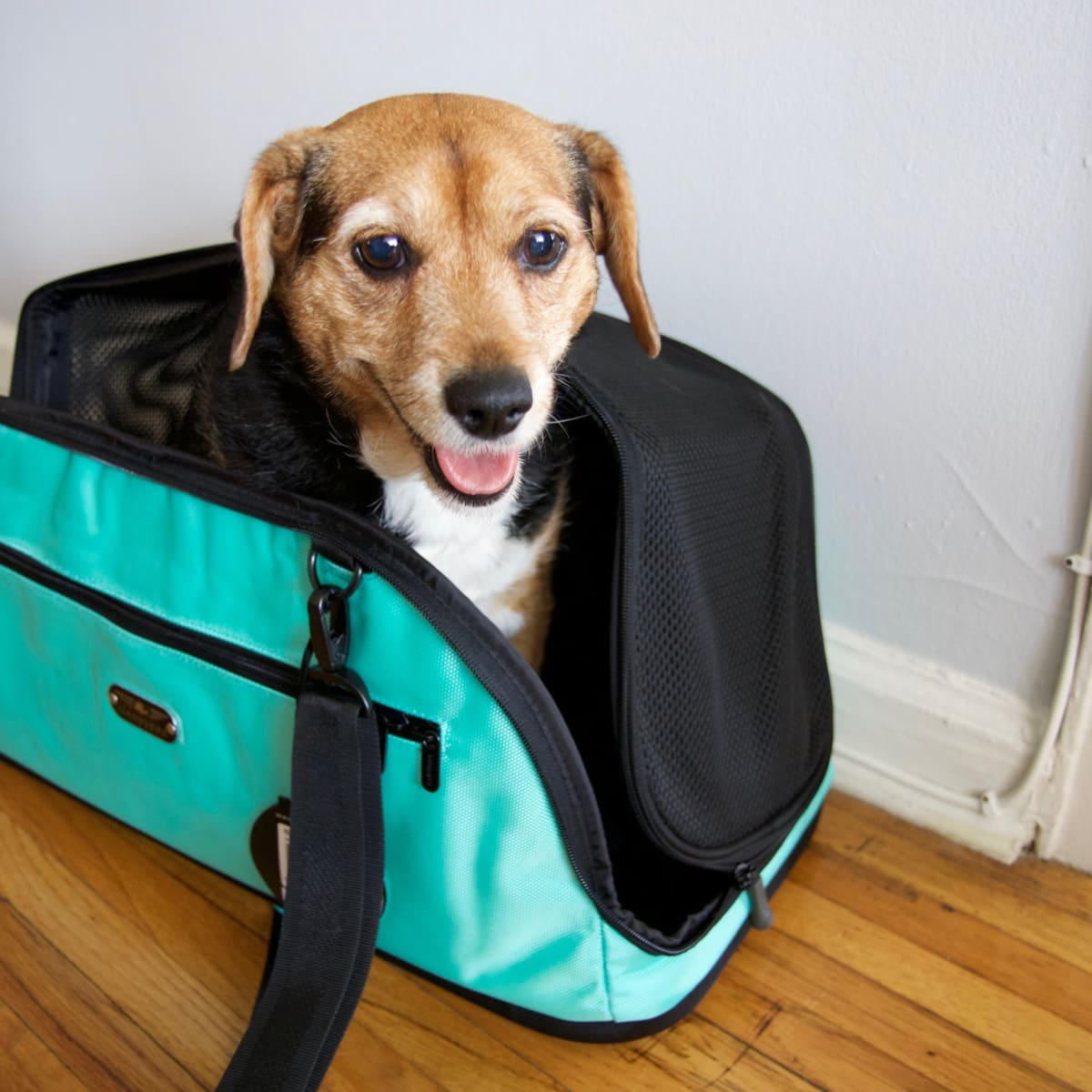 6ba10154a43 The Best Pet Carriers of 2019 - Reviewed Home & Outdoors