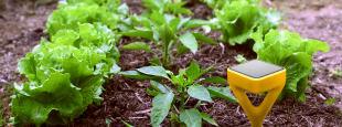 Edyn garden sensor 3