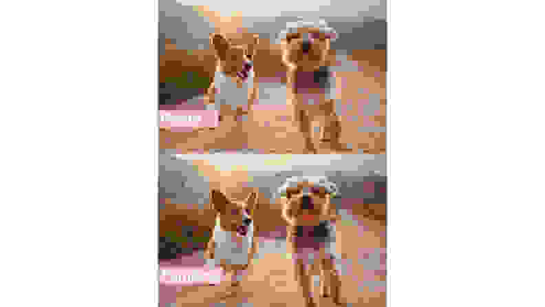 Before and after of paint by numbers dog picture