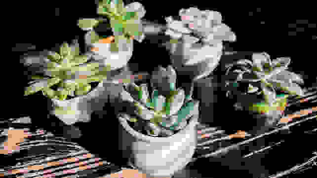 best-gifts-for-mom-2018-succulent-plants