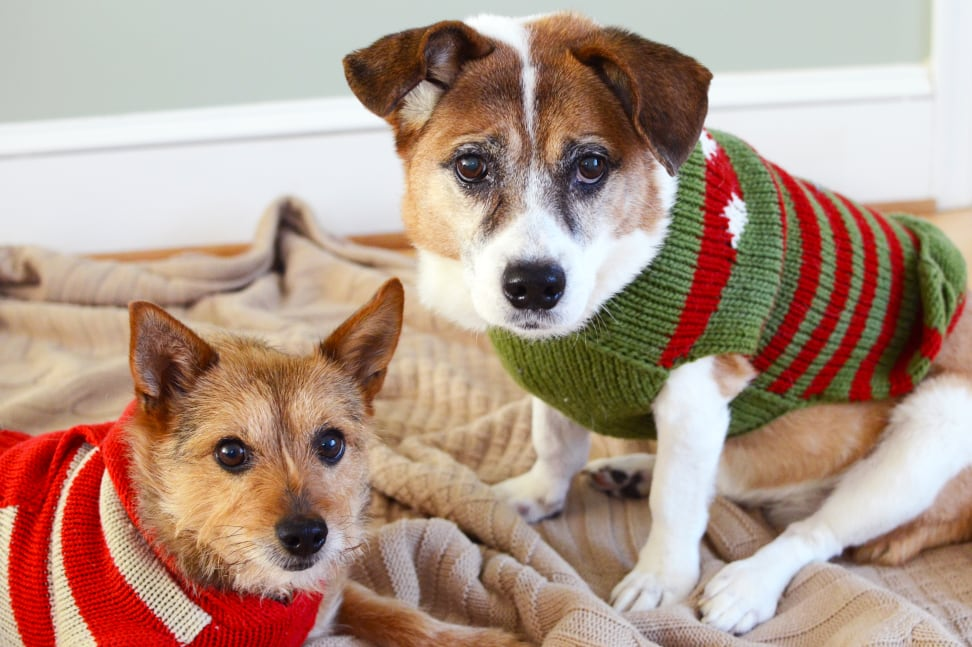 puppies in sweaters