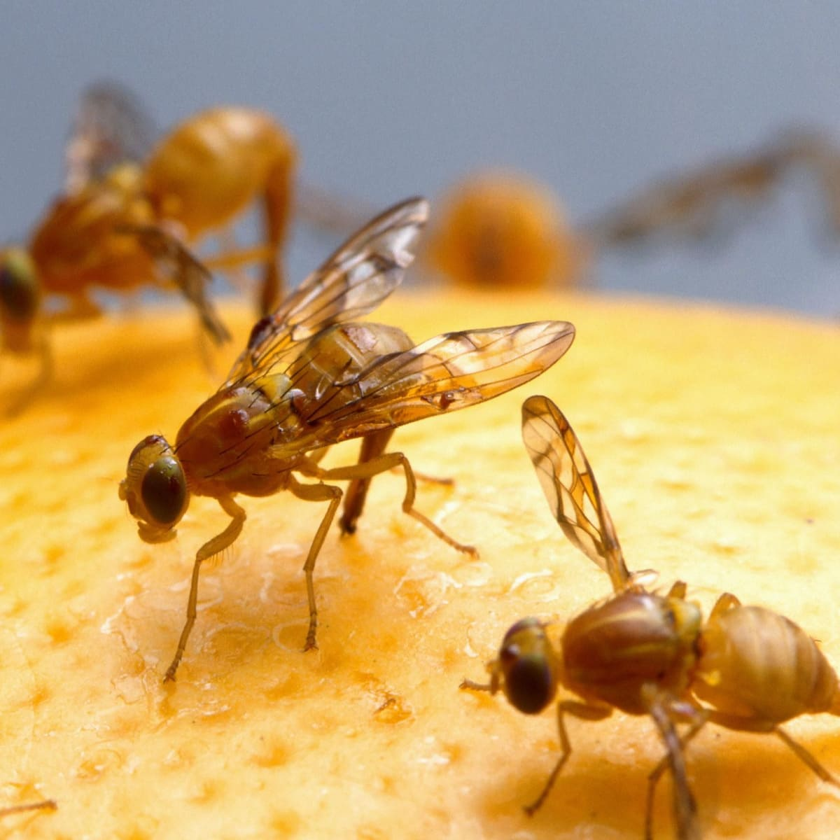 How to Get Rid of Fruit Flies Using Household Items - Reviewed