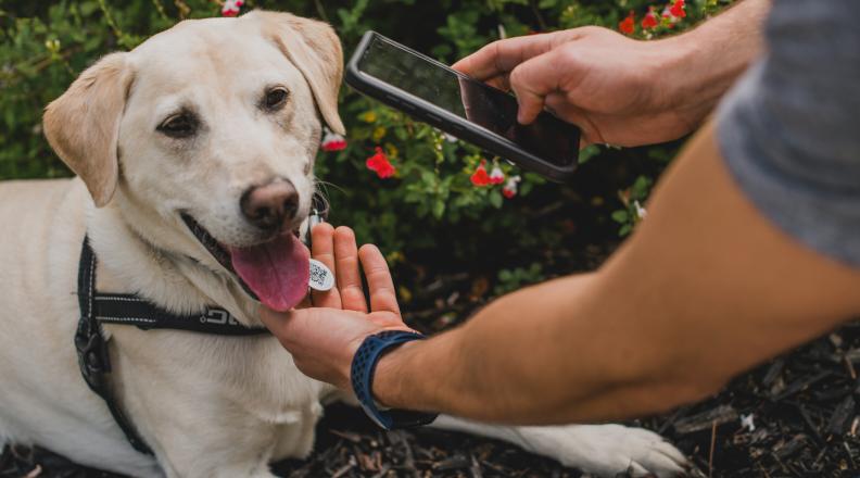 scan dog tag