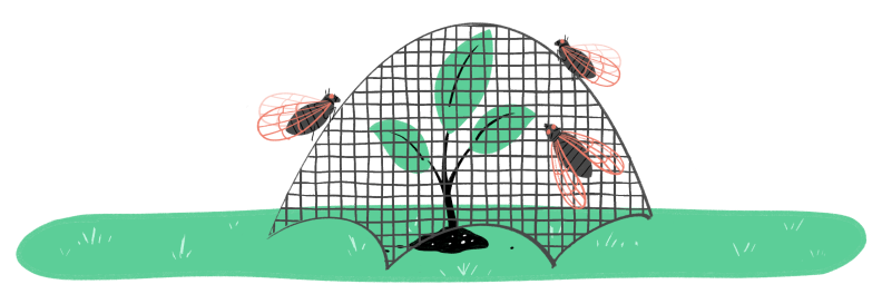 Illustration of young tree with garden netting protecting it from cicadas flying around