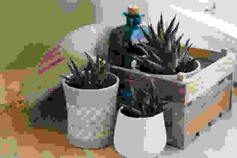 Succulent plants in wood container