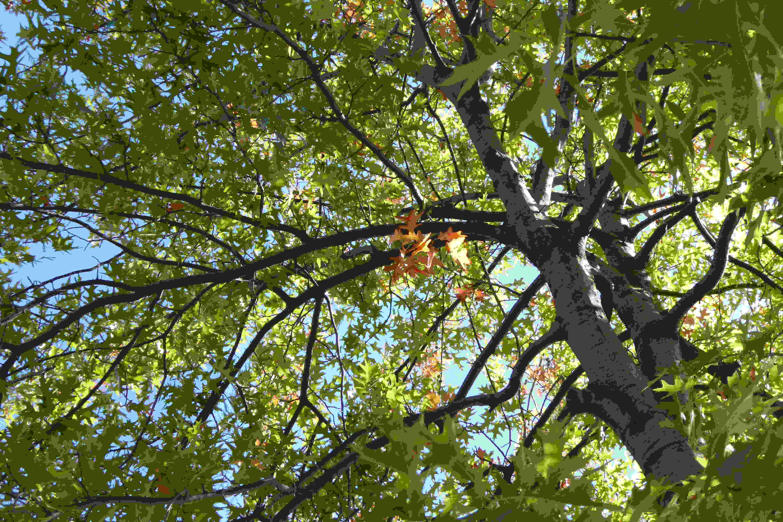 A sample photo of foliage taken by the Panasonic Lumix DSC-ZS40.