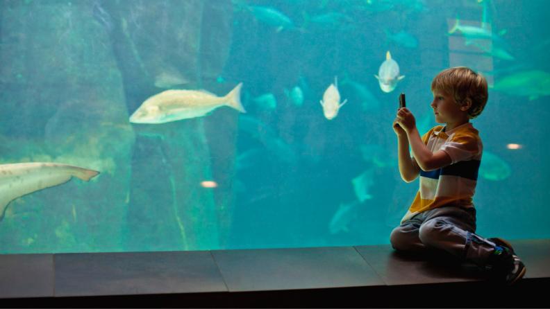 virtual aquarium tour