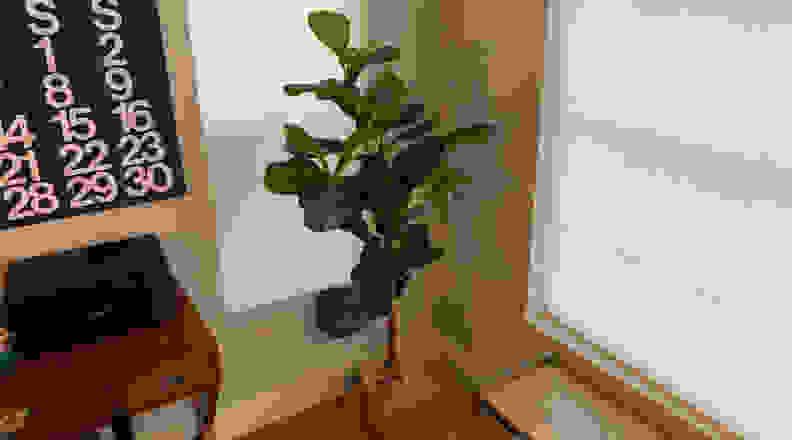 Fake fiddle leaf tree