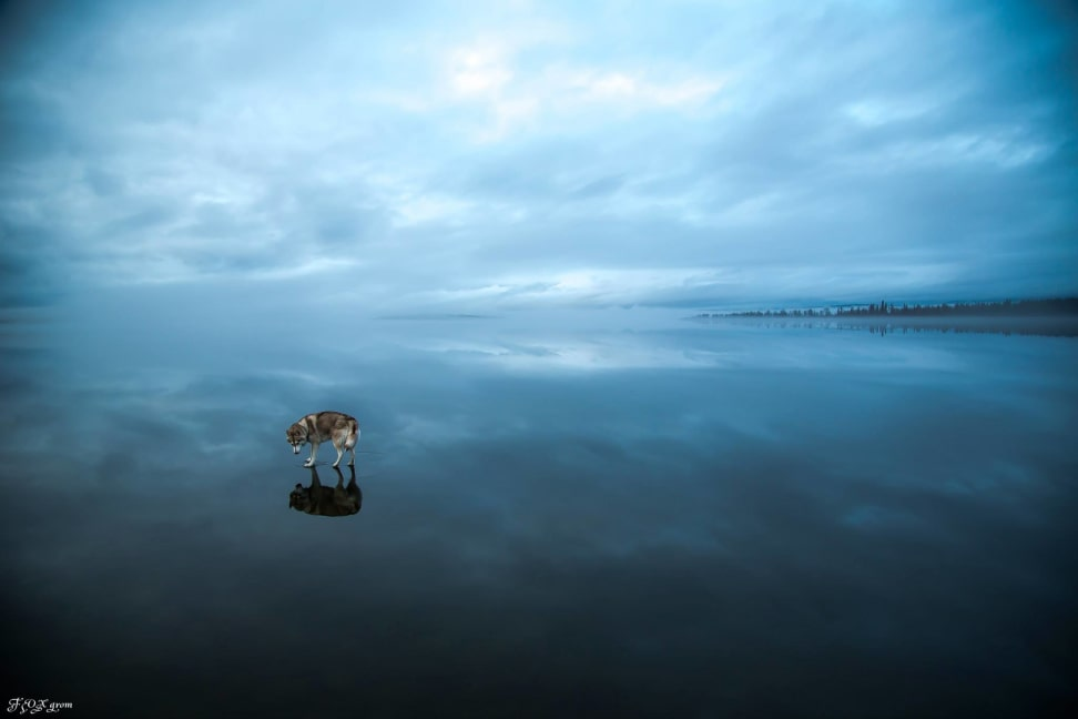 Huskies-Walking-On-Water-5.jpg