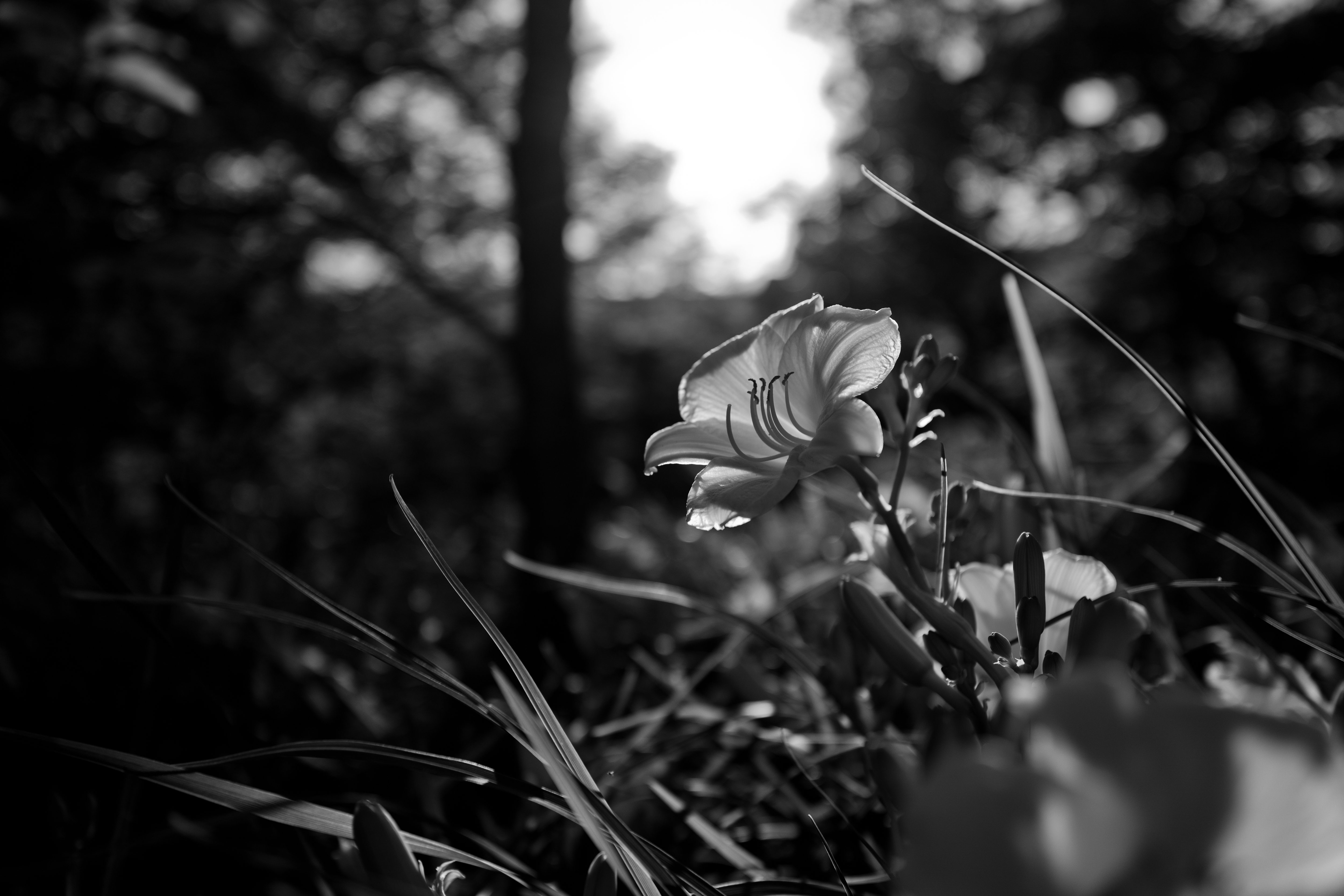 A photo of a flower taken by the Leica Q (Type 116).