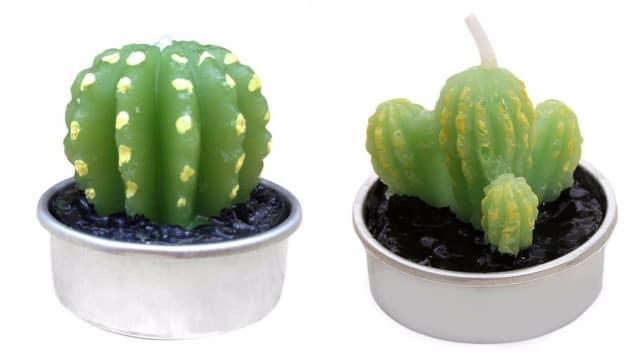 Cactus-Candle